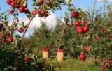 Fruit farms